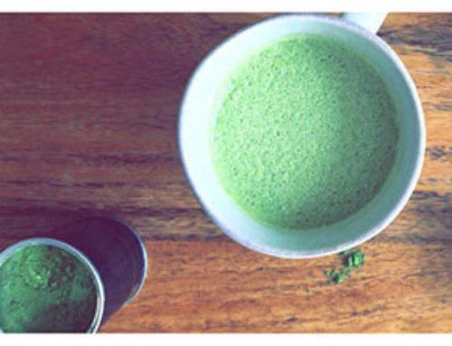 ¿Qué es el Té Matcha? La guía completa.